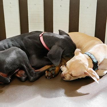 Pooch Hotel: We love dogs.