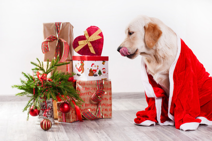 retriever puppy in Christmas costumes